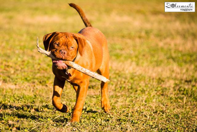 Viaggiare all'estero col cane? Austria dog friendly